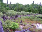 Île de la Perdrix Blanche
